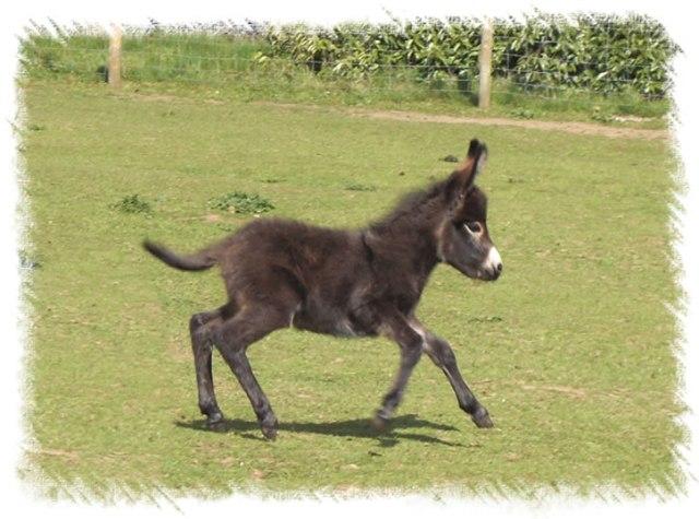 cute-donkey